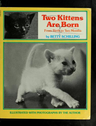 Two Kittens Are Born