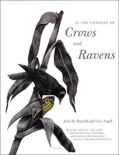 In the Company of Crows and Ravens 9780300122558