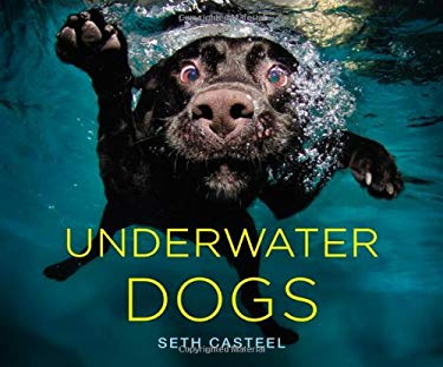 Underwater Dogs 9780316227704