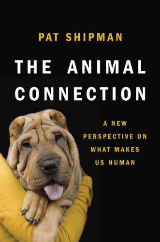 The Animal Connection: A New Perspective on What Makes Us Human 9780393070545