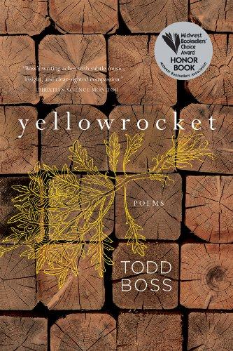 Yellowrocket