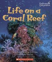 Life on a Coral Reef 1668253