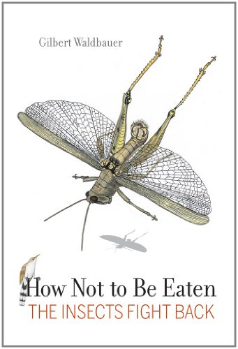 How Not to Be Eaten: The Insects Fight Back 9780520269125
