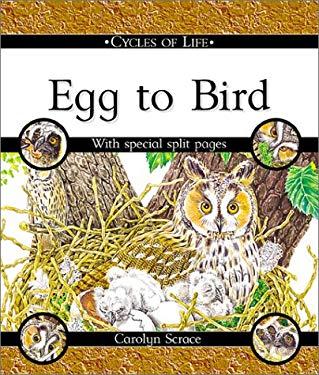 Egg to Bird 9780531148402