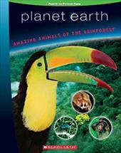 Amazing Animals of the Rainforest 1839944