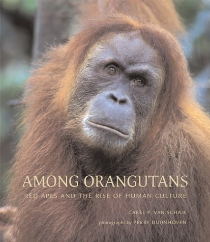 Among Orangutans: Red Apes and the Rise of Human Culture 9780674015777