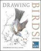 Drawing Birds 9780713668162