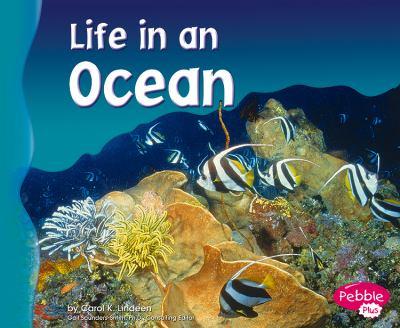 Life in an Ocean 9780736834063