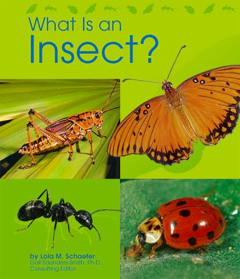 What Is an Insect 9780736890953