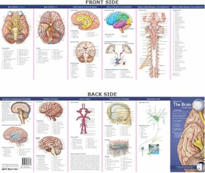Anatomy of the Brain 9780781776837