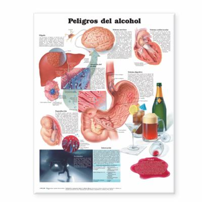 Dangers of Alcohol/Peligros del Alcohol