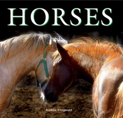 Horses 9780785825241