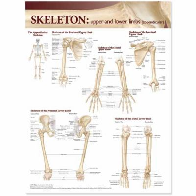Lippincott Williams & Wilkins Atlas of Anatomy Skeletal System Chart: Upper and Lower Limbs 9780781786539