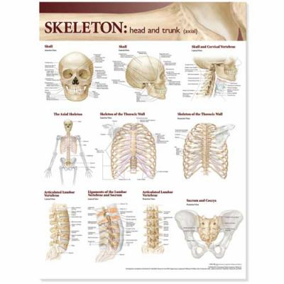 Lippincott Williams & Wilkins Atlas of Anatomy Skeletal System Chart: Head and Trunk 9780781786546