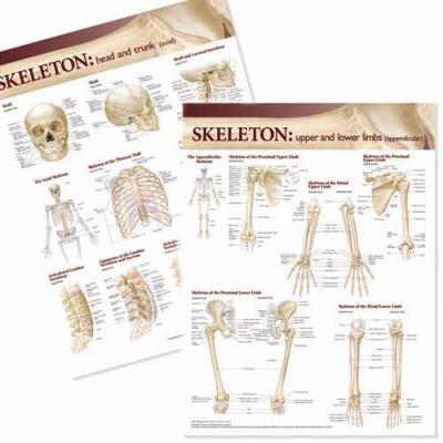 Lippincott Williams & Wilkins Atlas of Anatomy Skeletal System Chart Set 9780781786416