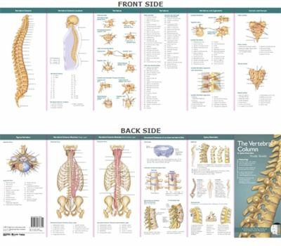 The Vertebral Column & Spine Disorders 9780781776820