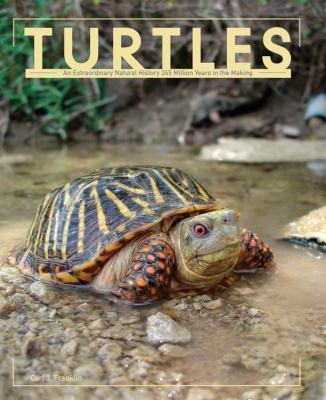 Turtles 9780785827757