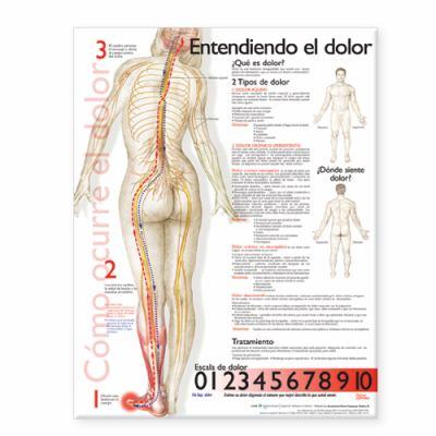 Understanding Pain Anatomical Chart in Spanish 9780781782289