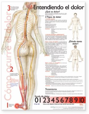 Understanding Pain Anatomical Chart in Spanish 9780781782296