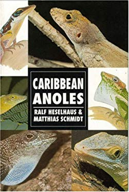 Caribbean Anoles