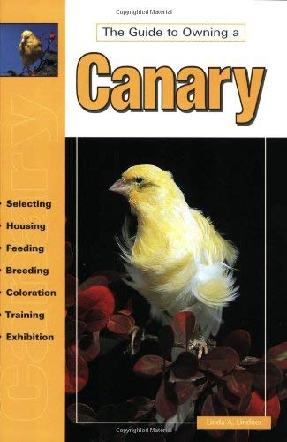 The Guide to Owning a Canary