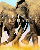 African Elephants 3376500