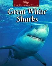 Great White Sharks 3482877