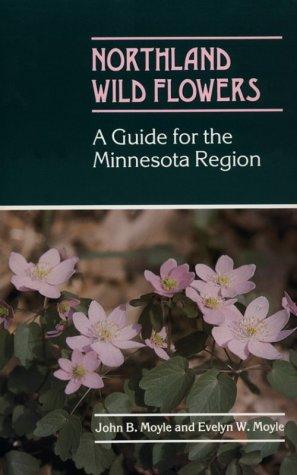 Northland Wild Flowers