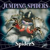 Jumping Spiders 3584588