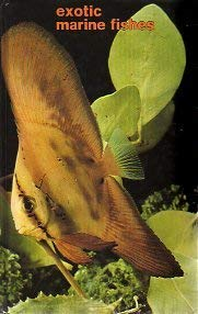 Exotic Marine Fish
