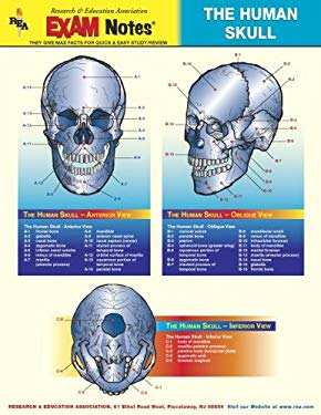 Human Skull Anatomy Exam Notes 9780878912414