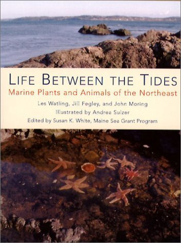 Life Between the Tides: Marine Plants and Animals of the Northeast 9780884482536