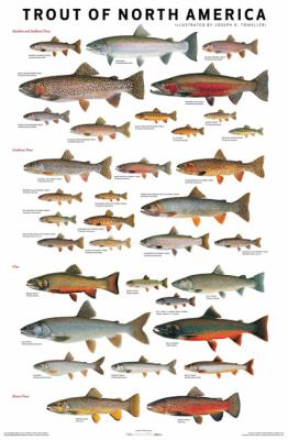 Trout of North America Poster 9780979903724