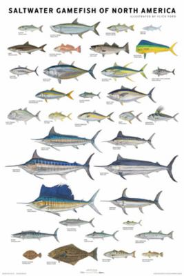 Saltwater Gamefish of North America Poster 9780979903748