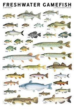 Freshwater Gamefish of North America Poster 9780982510230