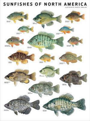 Sunfishes of North America 9780982510254