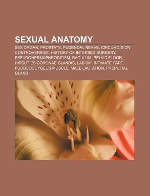 Sexual Anatomy: Sex Organ, Prostate, Pudendal Nerve, Circumcision ...