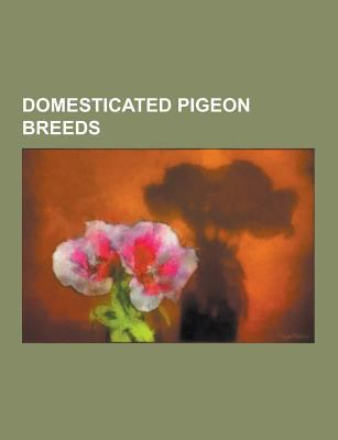 Domesticated Pigeon Breeds: Aachen Lacquer Shield Owl