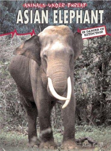 Asian Elephant 9781403455819