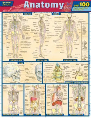 Anatomy 9781423217343