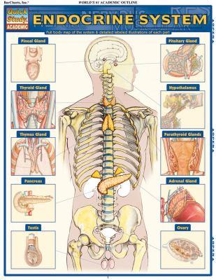 Endocrine System 9781423215004