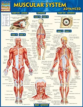 Muscular System Advanced 9781423217725