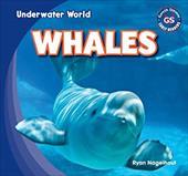 Whales (Underwater World) 20870468