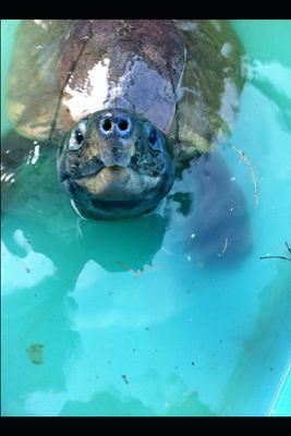 Turtle Boy: A boy, a dog and a turtle