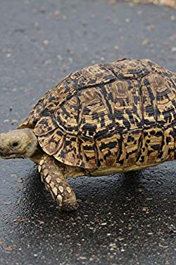 A Leopard Tortoise Reptile Journal: 150 Page Lined Notebook/Diary