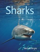 Sharks 15789830