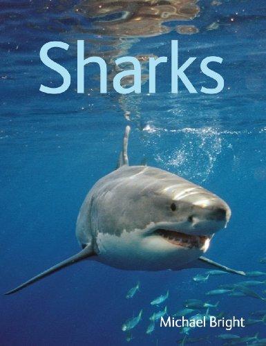 Sharks 9781554079889