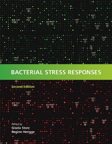 Bacterial Stress Responses 9781555816216