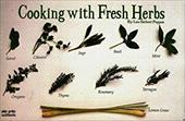 Cooking with Fresh Herbs 6912977