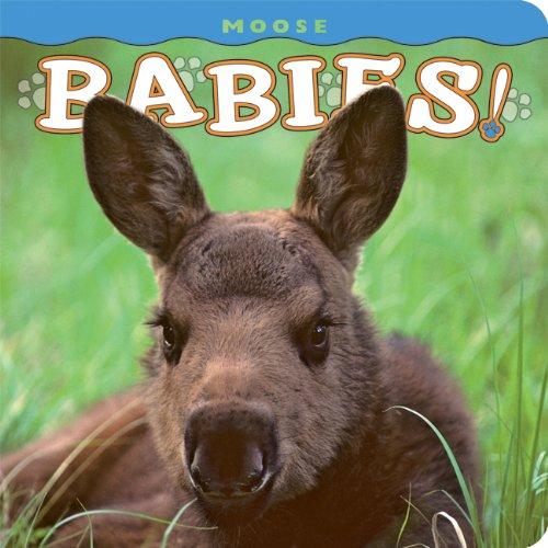 Moose Babies! 9781560375081
